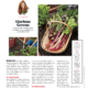 Southern Living Feb18 Homegrown Gardening